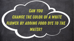 Can you change the color of a white flower by adding food dye to the water?