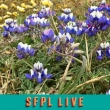 Presentation: Colorful Year Around Gardening with San Francisco Native Plants